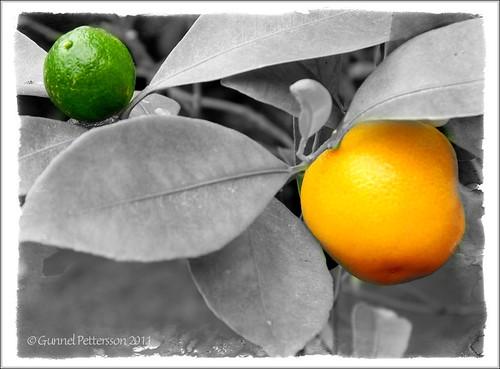 110702 Citrus remix