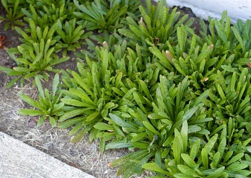 Weld rosettes (Large)