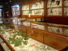 Glass flowers in glass cabinets