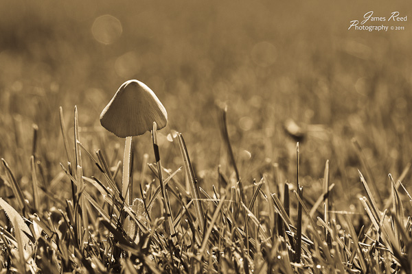 The shroom scape processed in antique sepia tone.