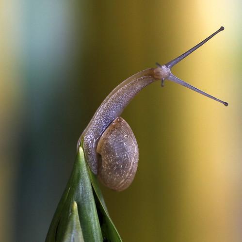snail yoga