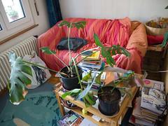 My Plants 10.jpg