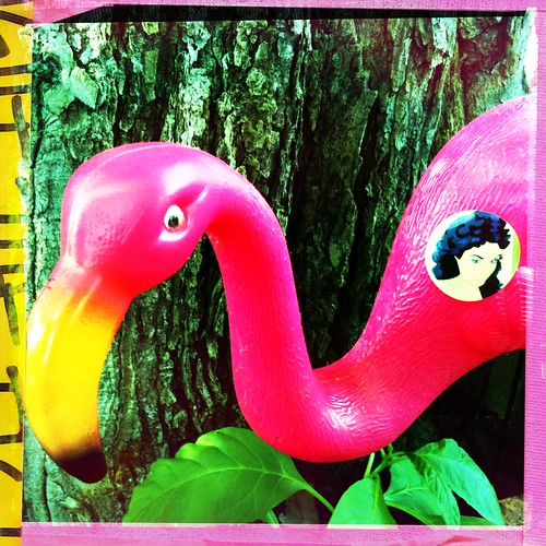 Julie and The Flamingo
