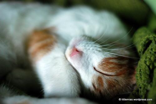 kitten-14 (2)