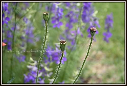 WM Spring Flowers 2
