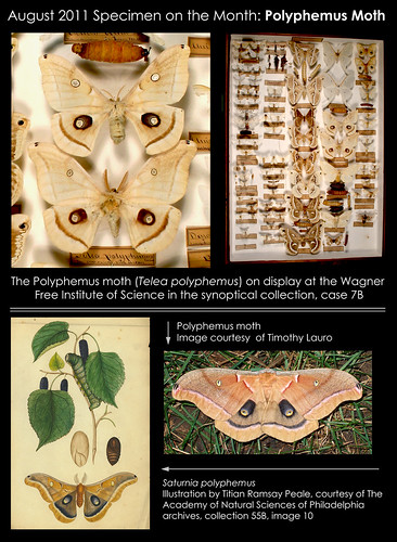 Specimen of the Month! August 2011. Courtesy Wagner Free Institute