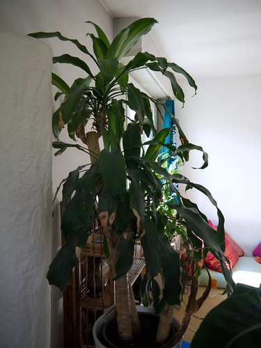 My Plants 13.jpg