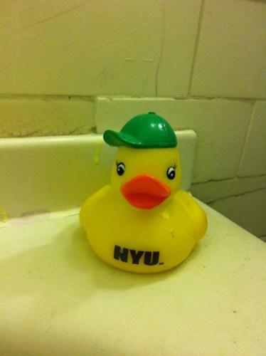 NYU duck is cool