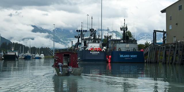 Kodiak and Island Mist in Valdez Harbor