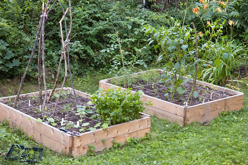 garden - the raised beds