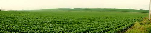 Nebraska Field Panarama
