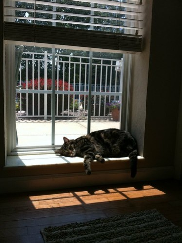 Kiki soaking up a last sunbeam at Grandmeow's. Little does she know she's heading to sunny Arizona today.