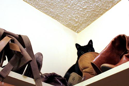 Closet Case Kitty - 1