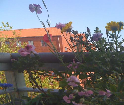 blandede sommerblomster