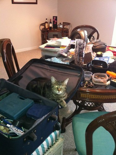 Our cat @kikinator is making sure she is coming with us this time! Packing up stuff to take to the bus.