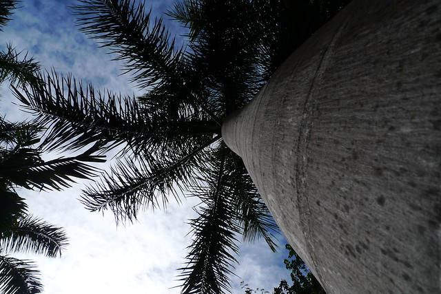The Epic Palm