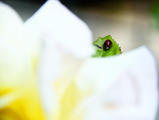 lady bug 012