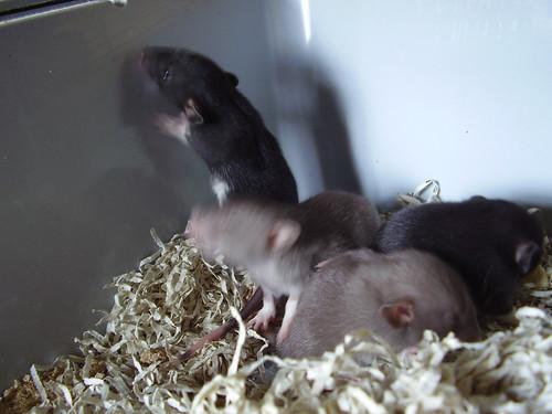 2011-08-03 babies 01