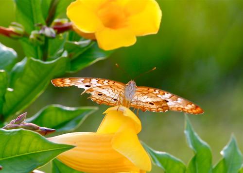Butterfly in Hiding by jessiwhitt
