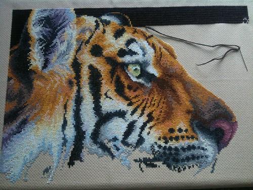 Regal Tiger - 30th September
