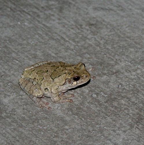 Suicidal Frog