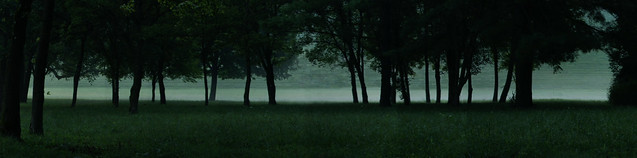 Grove of Trees at Dawn