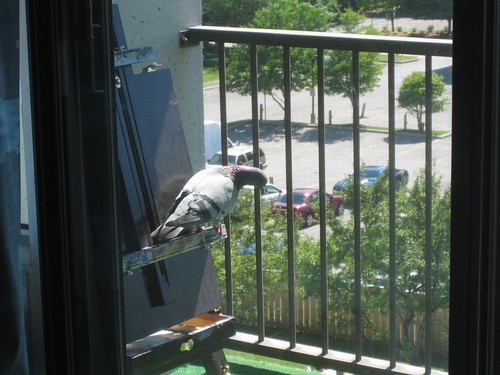 Frank, July 9, 2011 - pigeon
