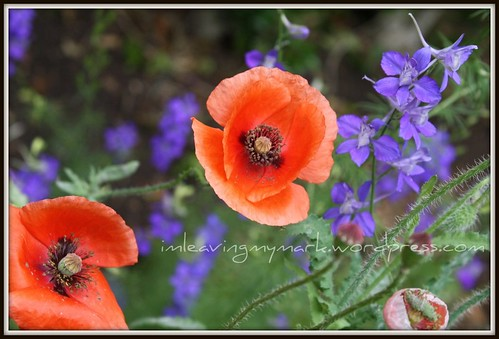 WM Spring Flowers 6