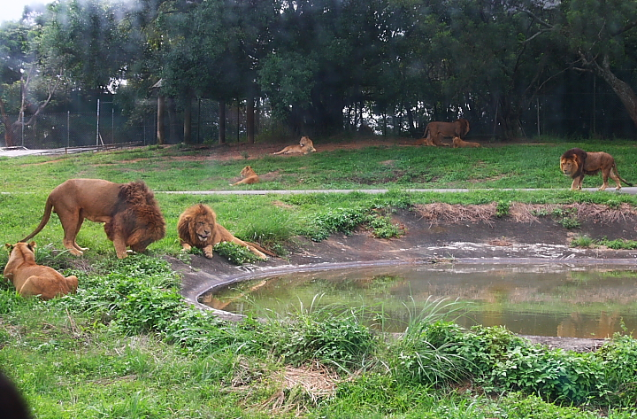 六福村動物園041