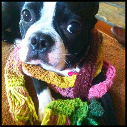 #Tinkerbell is so #stylish in her #cotton #knitted #scarf!
