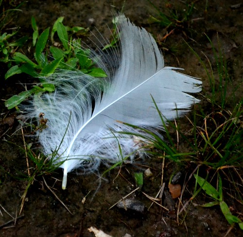 discarded feather