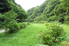 瀬上市民の森(池の下広場)(Square, Segami Community Woods)
