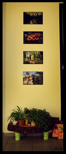 23/365 - El rincon de las plantas by EcoVirtual