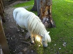Pony Tierpark Niederdorf im Hochpustertal