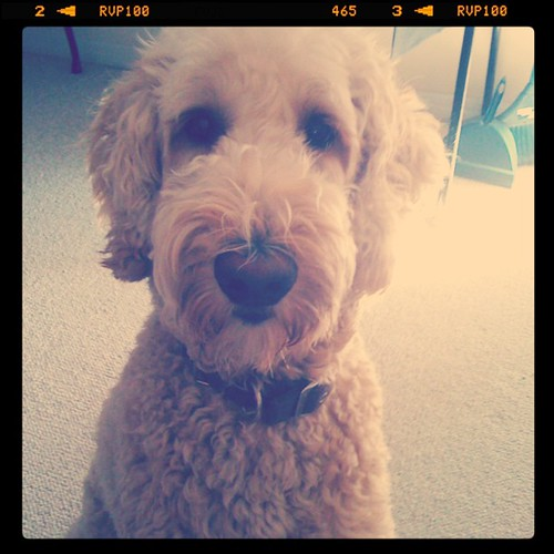 How am I supposed to get any work done with this guy whining in my ear and giving me please-let's-play puppy eyes?