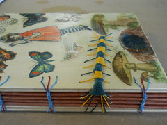 My caterpillar book on cords