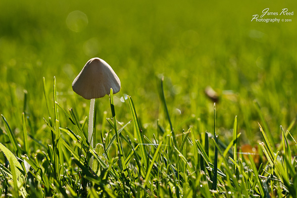 A tiny mushroom looms over a tinier landscape.