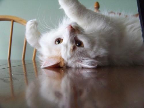 catsf