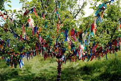 Nunnington Wishing tree