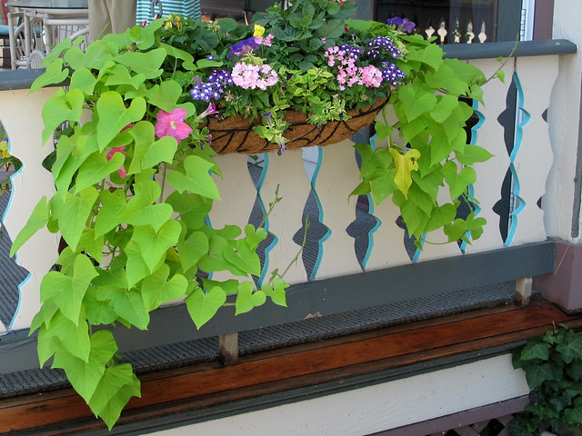 flowerbox w/ sweet potato vine