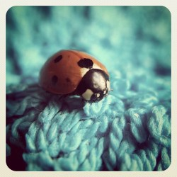 Sweet little ladybug on a towel