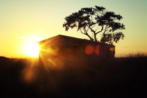 south texas sunrise