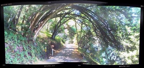 West Shore Trail at Lake Chabot
