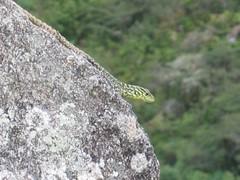 2004_Machu_Picchu 87