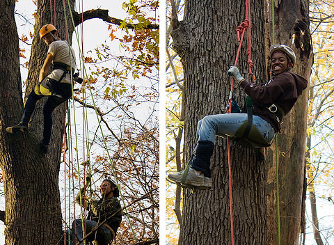 tree-climbers