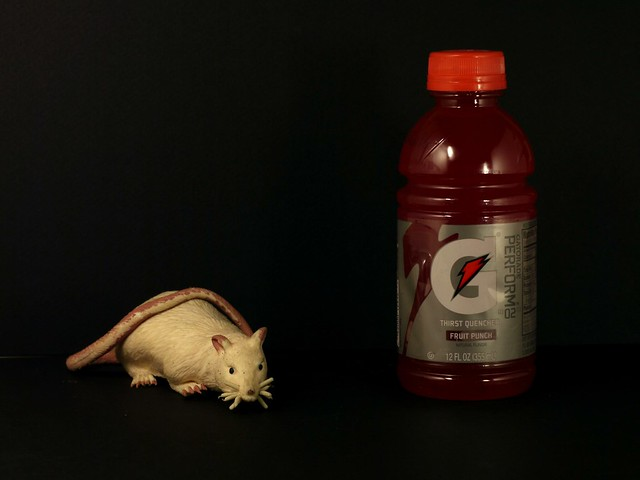 Rat and Gatorade