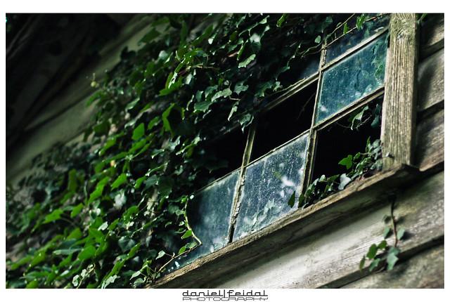 The secret of the window