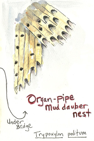 20110704_organpipe_sketch3