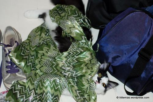 sprock scarf 10-12-2011 6-24-58 PM