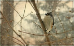 Winter bird in the snow